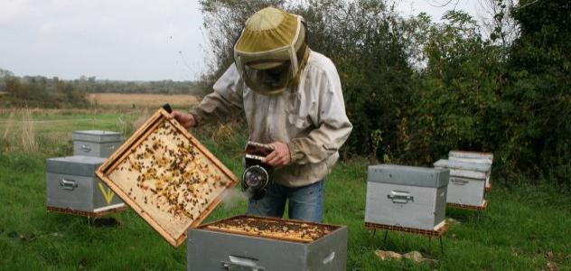 Fiche métier apiculteur